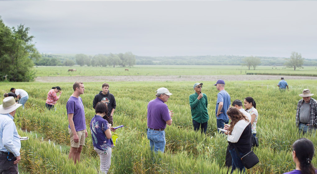 Kansas State University's leadership in wheat research recognized with $1.6M grant