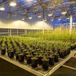 WGRC Greenhouse