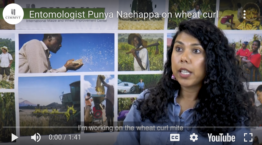 Punya Nachappa discusses Wheat Curl Mites